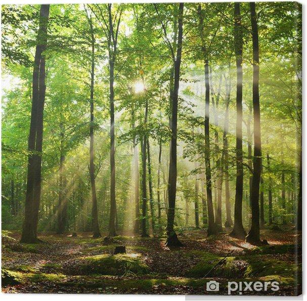 Canvas Forest - Bossen