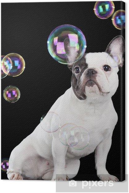 Canvas Franse bulldog - Franse Bulldogs