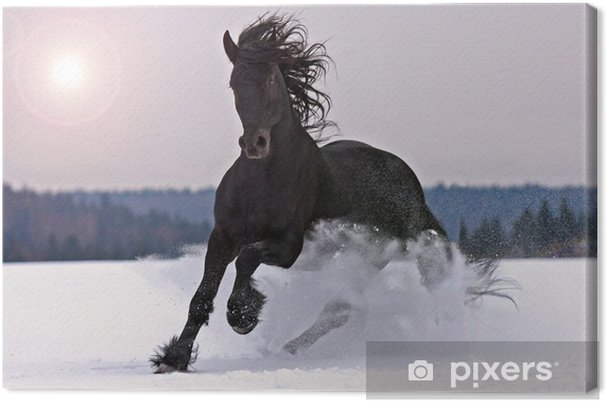 Canvas Friese paard op sneeuw - Thema's