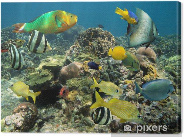 Canvas Gezond koraalrif met kleurrijke vissen - Koraalrif