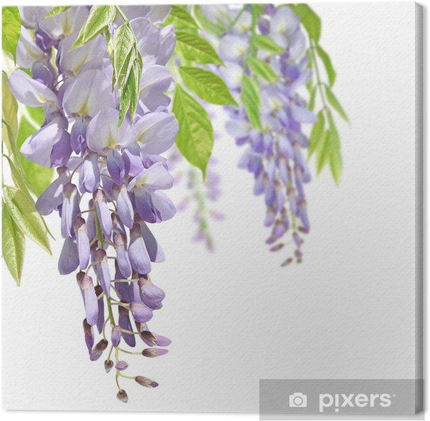 Canvas Glycine mauve - Bloemen