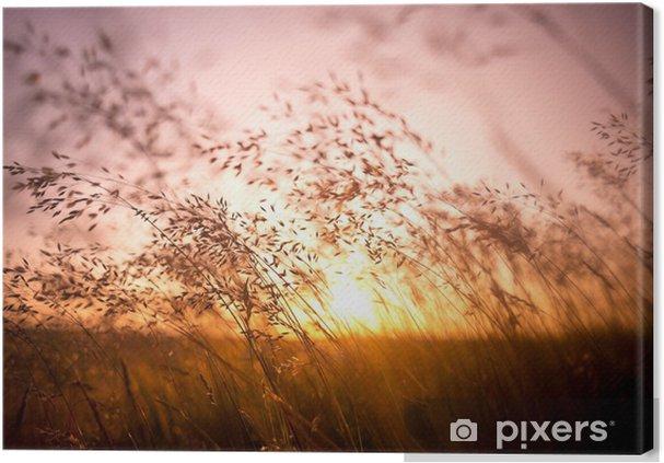 Canvas Gras in de zon - Thema's