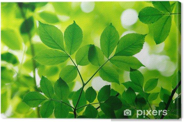 Canvas Groene bladeren - Bladeren