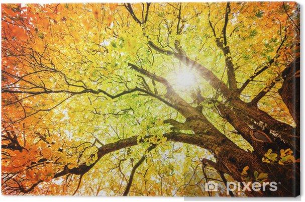 Canvas Herfst boom - iStaging