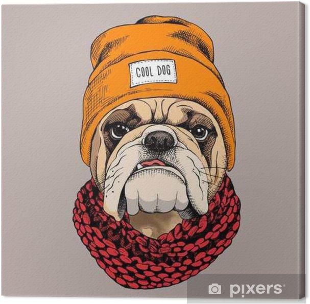 Canvas Het portret van de buldog in een hipster hoed en gebreide sjaal. Vector illustratie. - Dieren