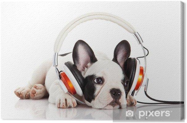 Canvas Hond luisteren naar muziek met een koptelefoon geïsoleerd op witte backgro - Zoogdieren