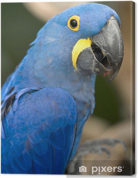 Verbazingwekkend Canvas Hyacint ara blauwe vogel papegaai brazilie pantanal 2 NI-69