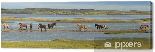 Canvas IJslandse paarden - Europa