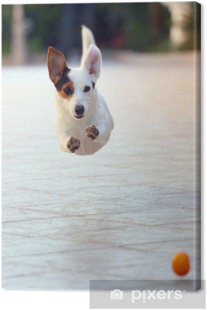 Canvas Jack Russel Jump 3 - Zoogdieren