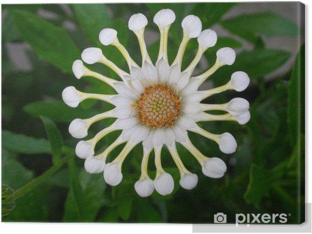 Canvas Kapkörbchen - Bloemen