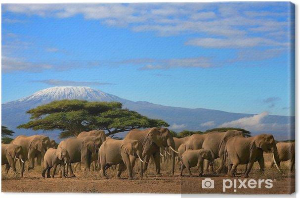 Canvas Kilimanjaro Met Elephant Herd - Thema's