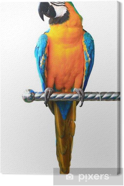 Canvas Kleurrijke rode papegaai ara geïsoleerd op witte achtergrond - Muursticker