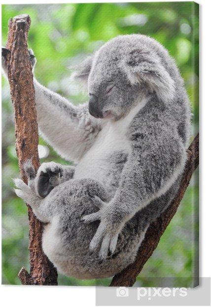 Canvas Koala die een rust - Oceanië
