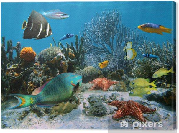 Canvas Koraalrif en zeesterren - Koraalrif