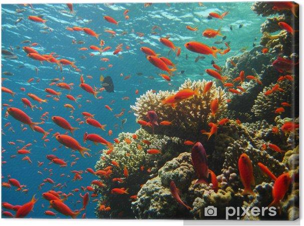 Canvas Korallenriff - Koraalrif