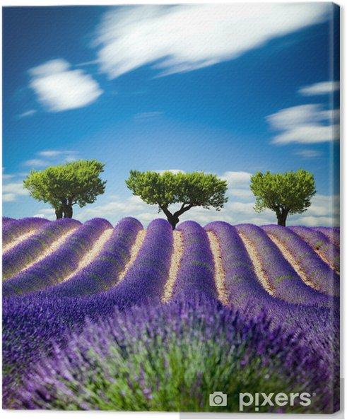 Canvas Lavande de Provence Frankrijk / Lavendel veld in Provence, Frankrijk -