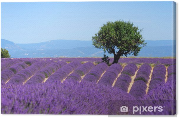 Canvas Lavendel veld. Het plateau van Valensole in de Provence - Stijlen