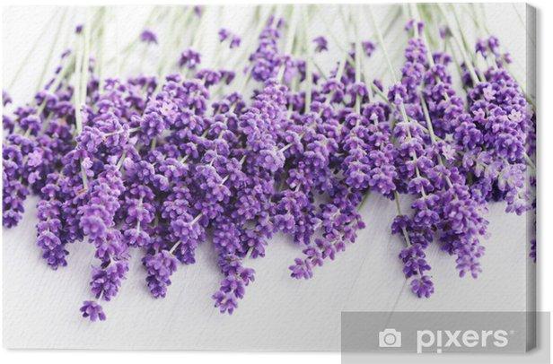 Canvas Lavendel - Gezondheid en Geneeskunde