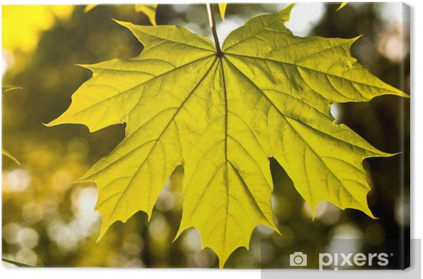 Canvas Leaf - Grondstoffen