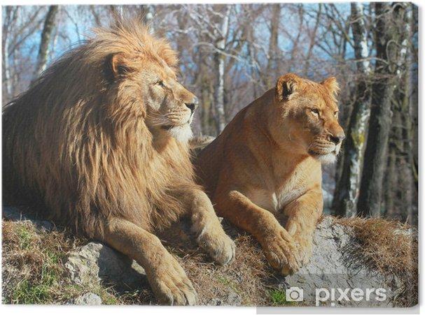 Canvas Leeuw en leeuwin - Thema's