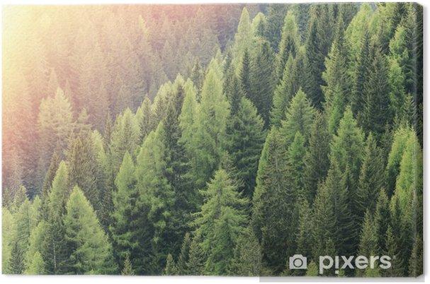 Canvas Magic Forest verlicht door de zon. Naaldbos regio. - Landschappen