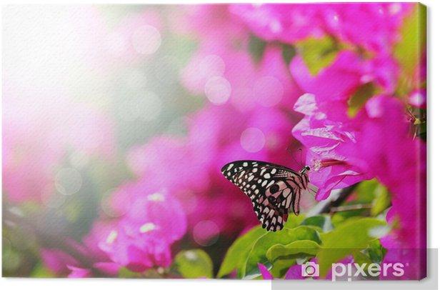 Canvas Majestic ochtend scène met vlinder voeden op nectar van een bou - Thema's