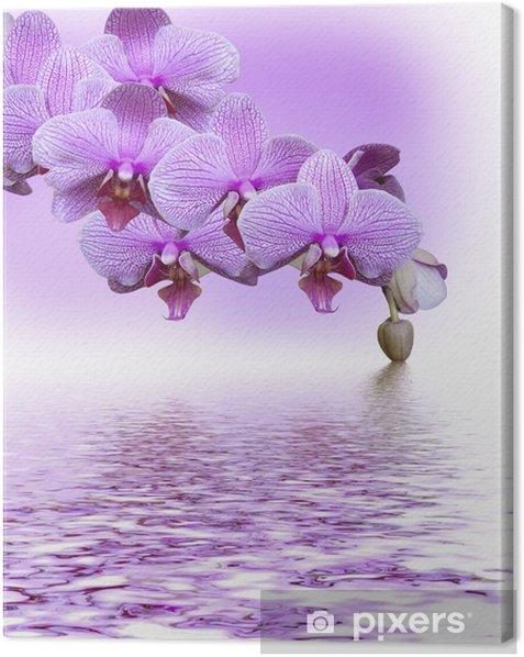 Canvas Mooie lila orchidee - Thema's