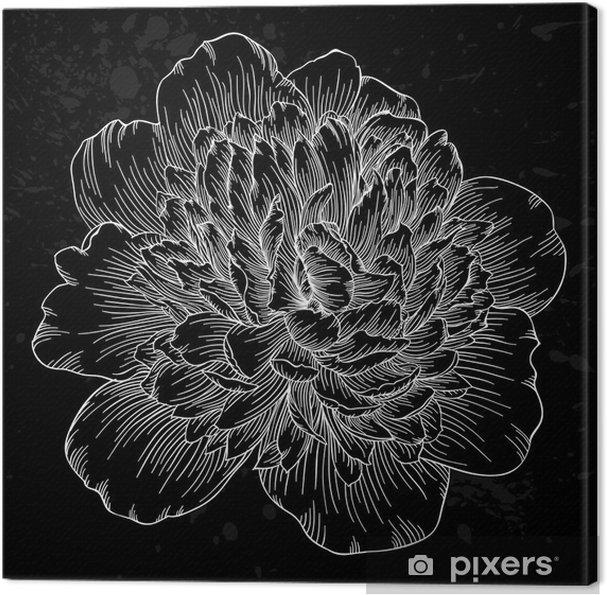 Canvas Mooie zwart-witte pioen bloem geïsoleerd op de achtergrond. Met de hand getekende contourlijnen en beroertes. - Bloemen en planten