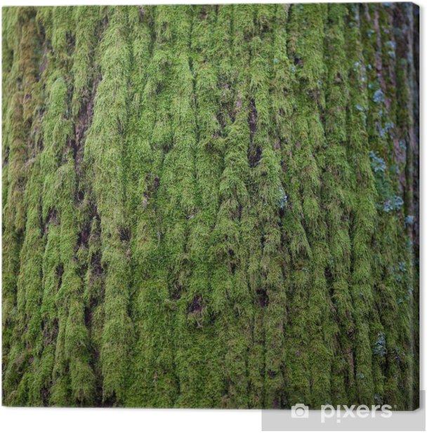 Epifyten Mossen En Korstmossen Ziekten