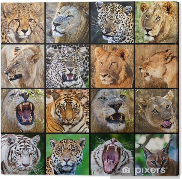 canvas mozaïek van grote katten foto's • pixers® - we leven om te