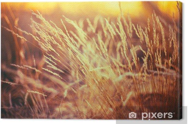 Canvas Natuur Gestemde Grasachtergrond droog gras - Planten