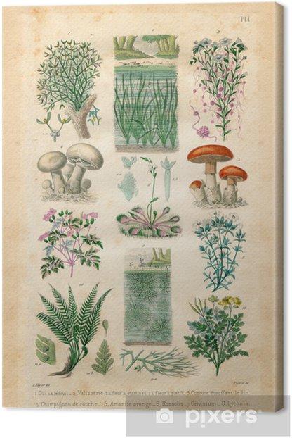 Canvas Natuurlijke historie: planten en bloemen - Planten