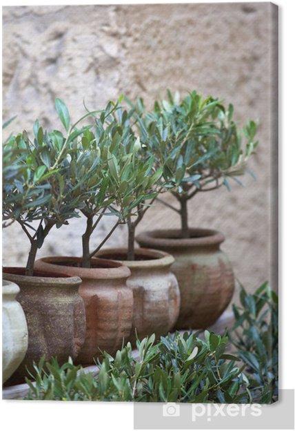 Boom In Pot Tuin.Canvas Olijfolie Plant Middellandse Zee Ten Zuiden Boom Tuin Pot
