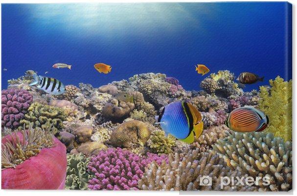 Canvas Onderwater wereld. Koraal vissen van de rode zee. - Vis