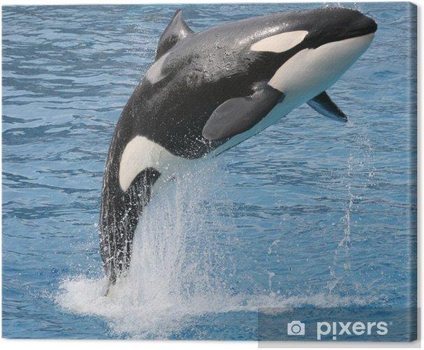 Canvas Orka sprong - Onderwater