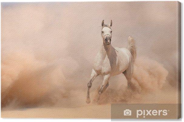 Canvas Paard lopen in de woestijn - Woestijnen