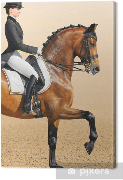 Canvas Paardensport - dressuur, close-up - Individuele sport