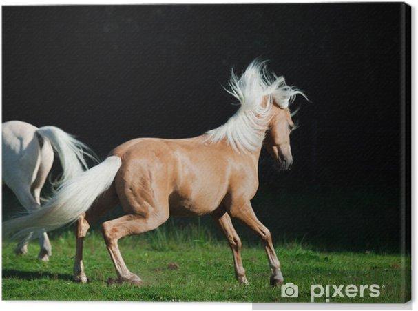 zwarte pone