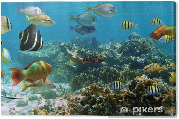 Canvas Panorama in een koraalrif met school van vissen - Koraalrif