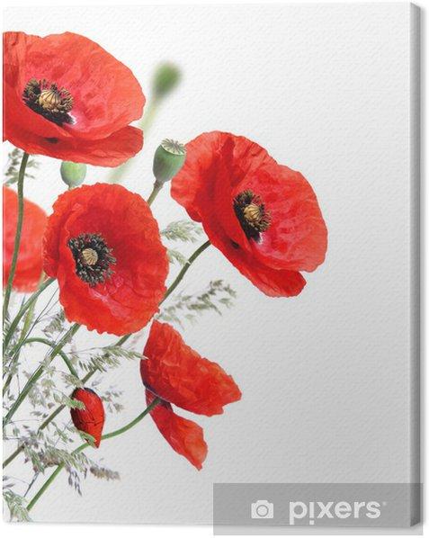 Canvas Papaver bloemen geïsoleerd op een witte achtergrond - Thema's