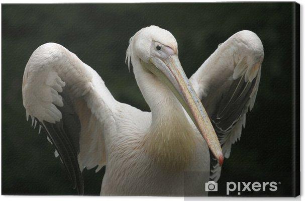 Canvas Pelikaan - Vogels