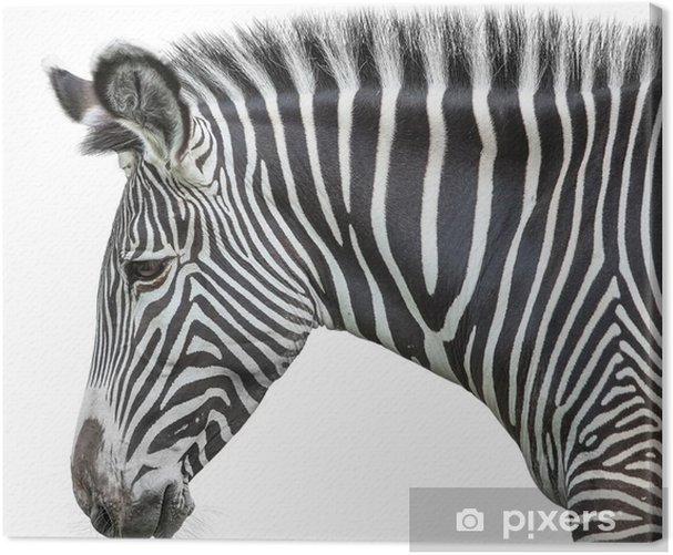 Canvas Portret van zebra - Muursticker