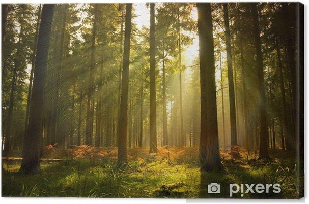 Canvas Prachtig boslandschap - Stijlen