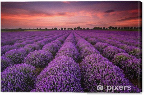 Canvas Prachtig landschap met een lavendelveld tijdens zonsondergang -