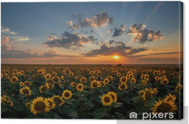 Canvas Prachtige zonsondergang over een zonnebloem veld - Thema's