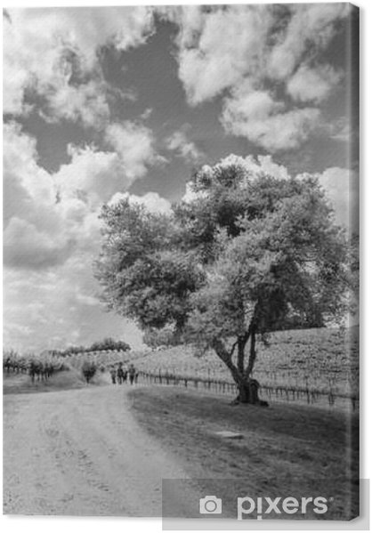 Canvas premium Shake Ridge Ranch Vineyards - Landschappen