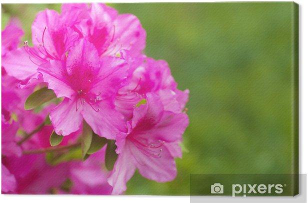 ツツジ Canvas Print - Flowers