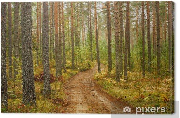 Дороги Карелии Canvas Print - Europe