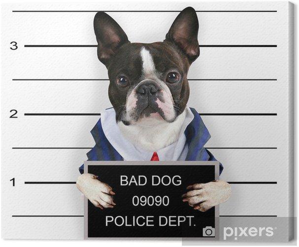 a mugshot of a bad dog Canvas Print - Mammals