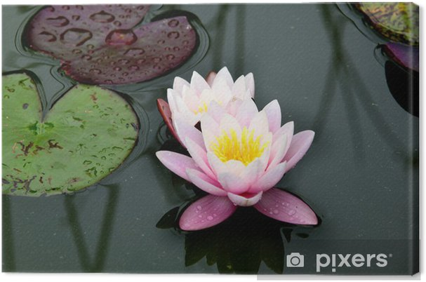 A Pink Lotus Flower And Lily Pads With Saturated Color Canvas Print